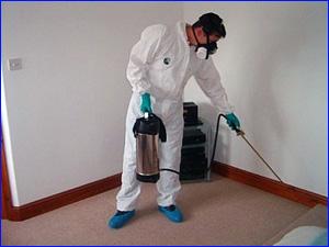 услуги и способы уничтожения муравьев