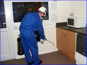 уничтожение и травля тараканов на кухне фото