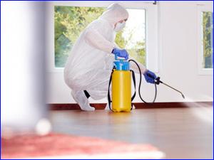 Профессиональное уничтожение насекомых в квартире и в доме