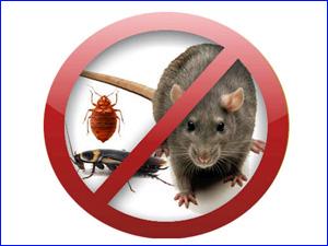 Полное уничтожение насекомых в Красноярске