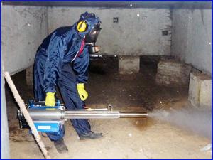 Уничтожение любых насекомых в подвальных помещениях ангарах и гаражах